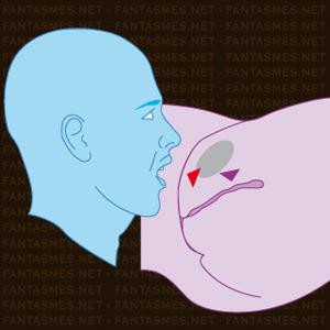 massage érotique dans le var positions sexuelles faciles